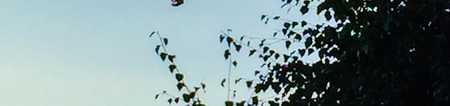 baloon21-1
